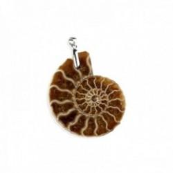 Colgante plata Ley 925m. amonita ammonite natural 22mm. amuleto suerte unisex